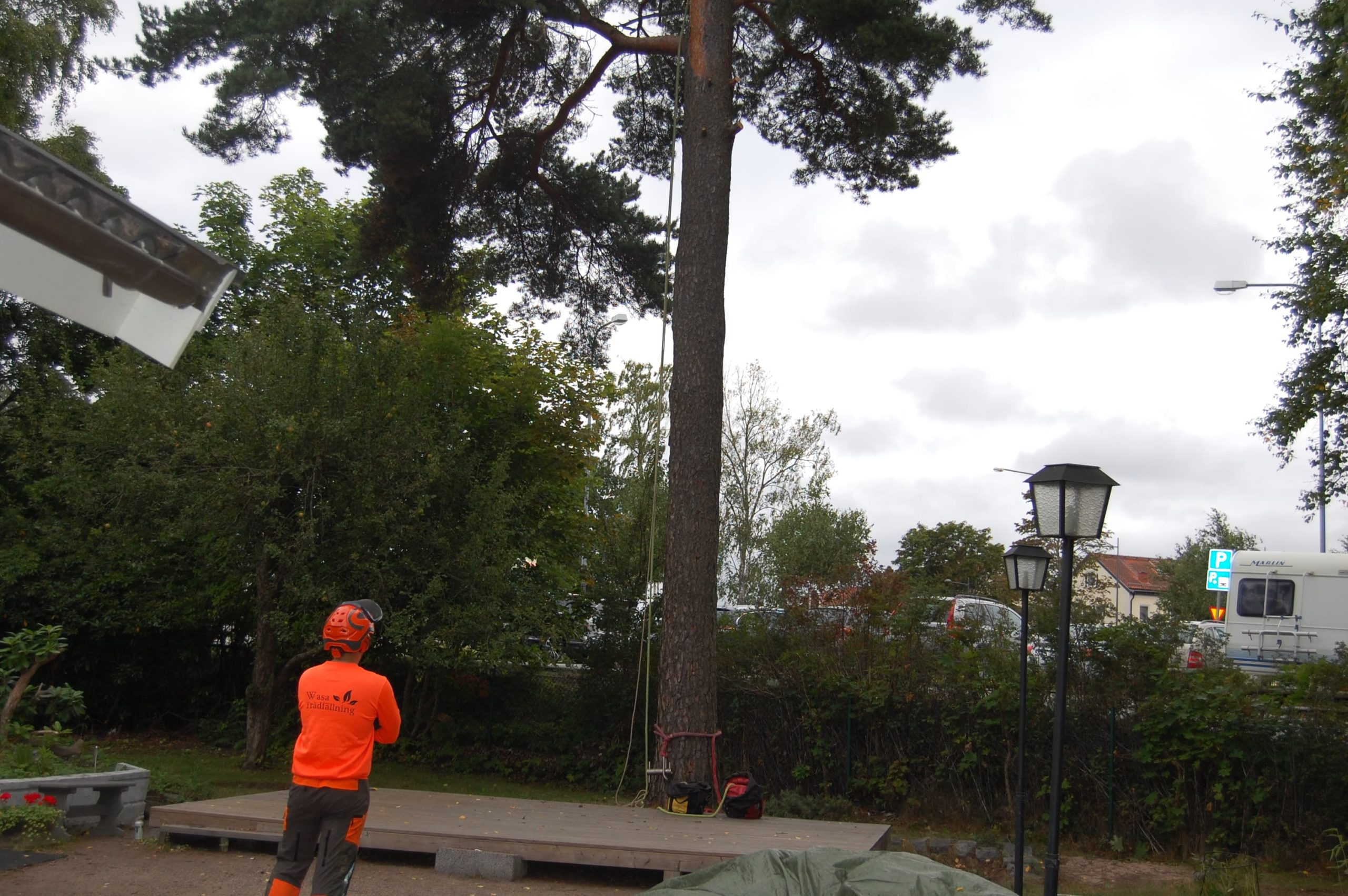 Trädfällning i Upplands Väsby