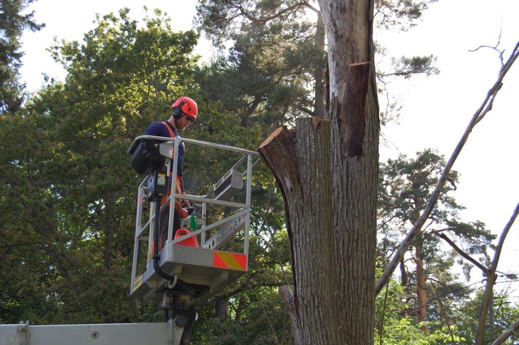 Trädfällning Bromma