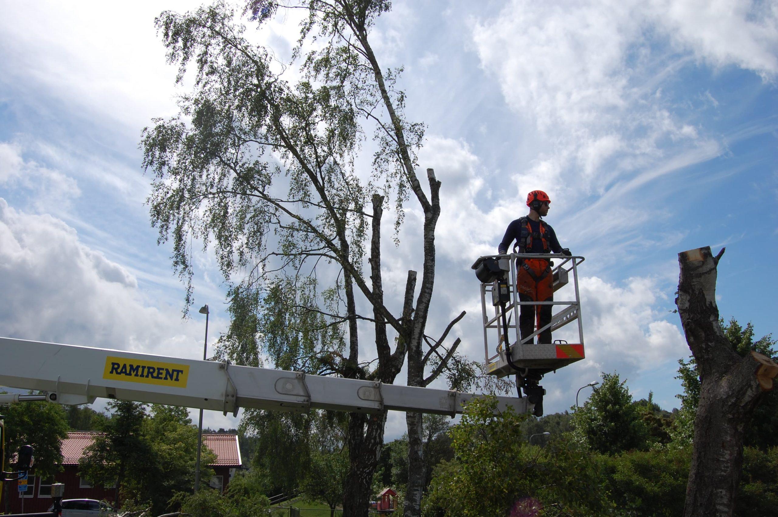 Trädfällning i Österåker
