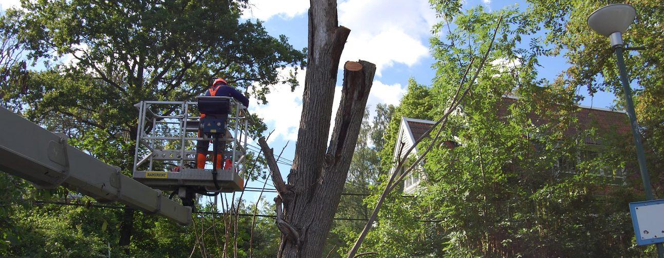 Trädfällning med hjälp utav lyftkran i Huddinge