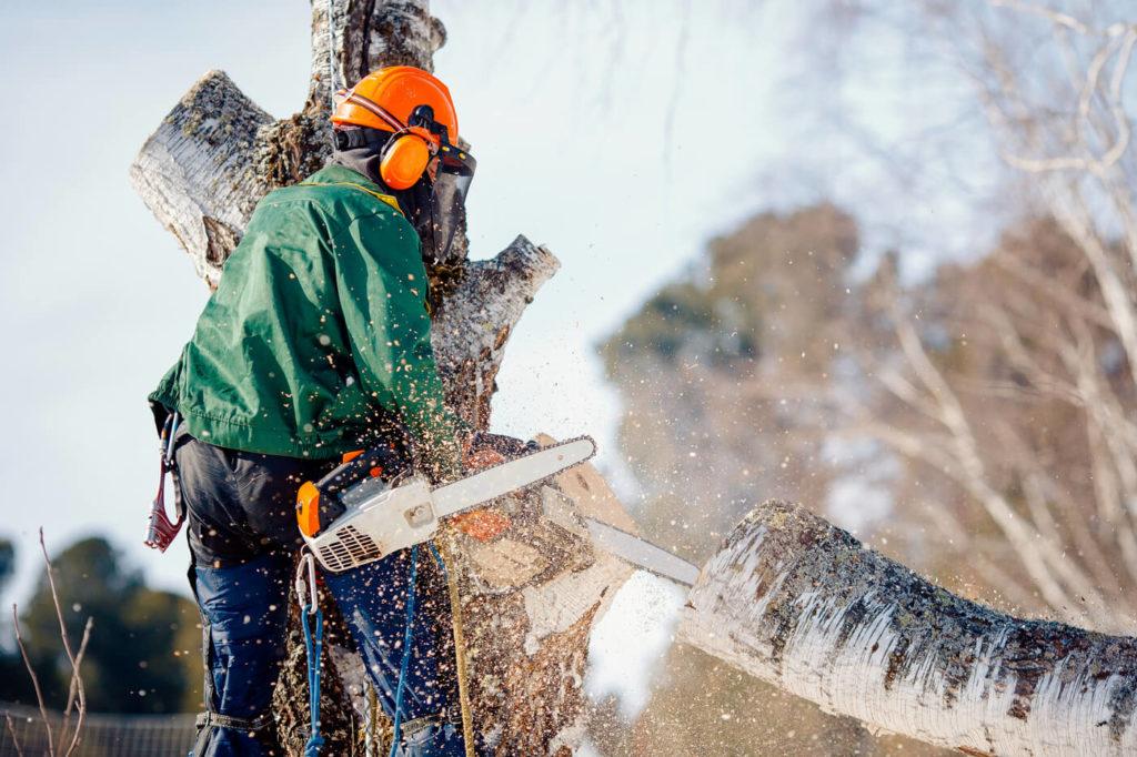 Trädfällning i Nynäshamn
