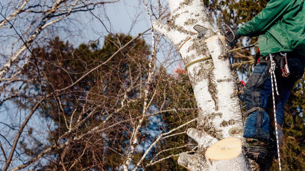 Arborist Bromma