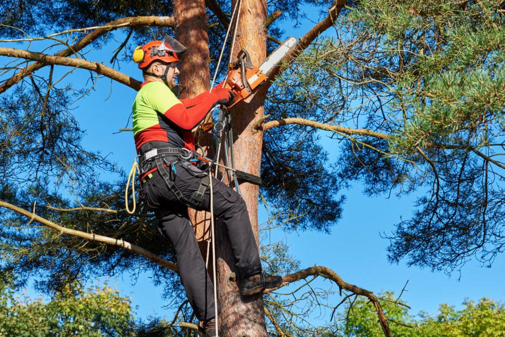 Trädfällning i Farsta