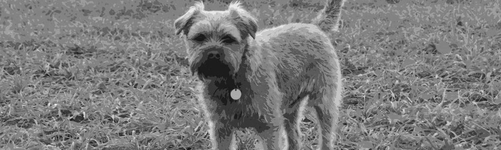 Dexter The Border Terrier