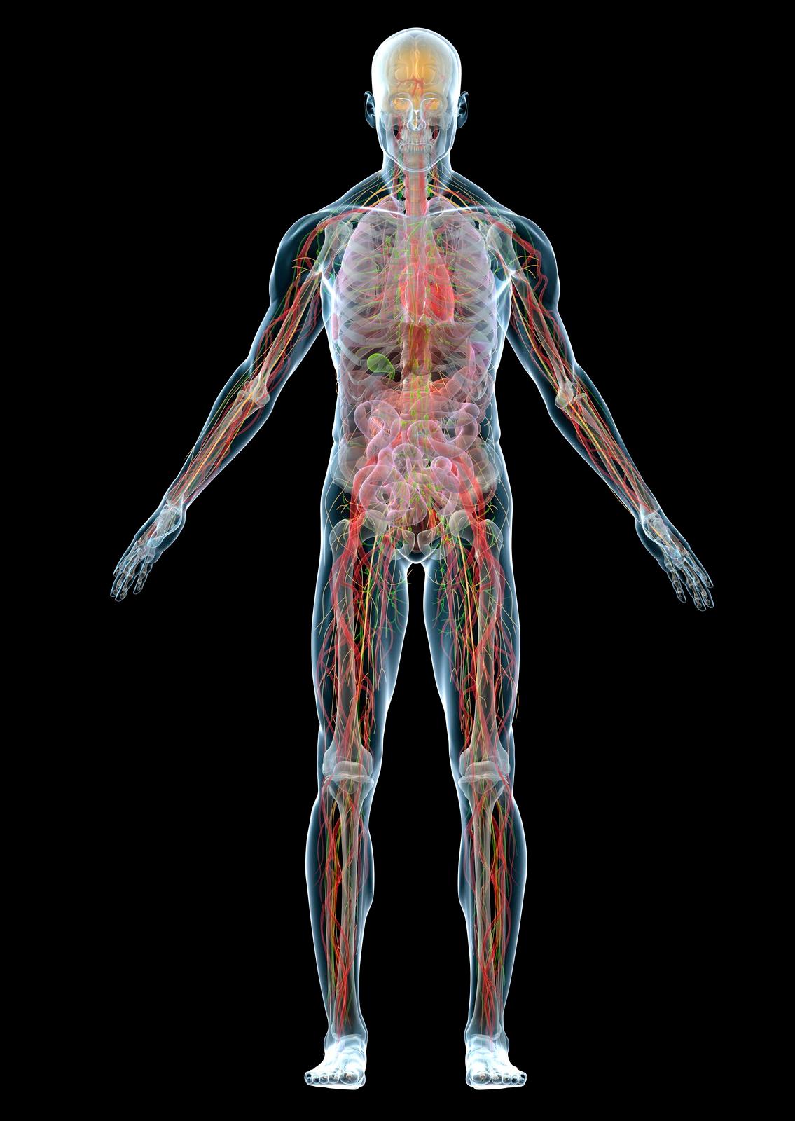 Órganos 3D