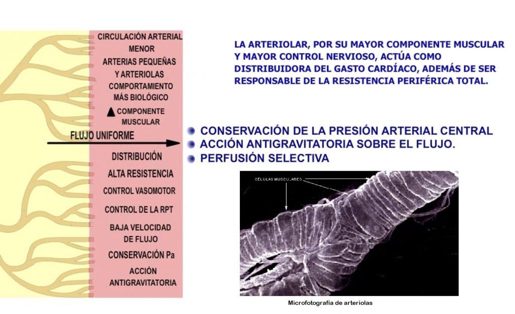 función arteriolar