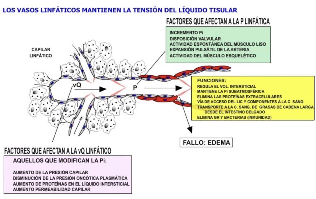 Dinámica de la circulación linfática.