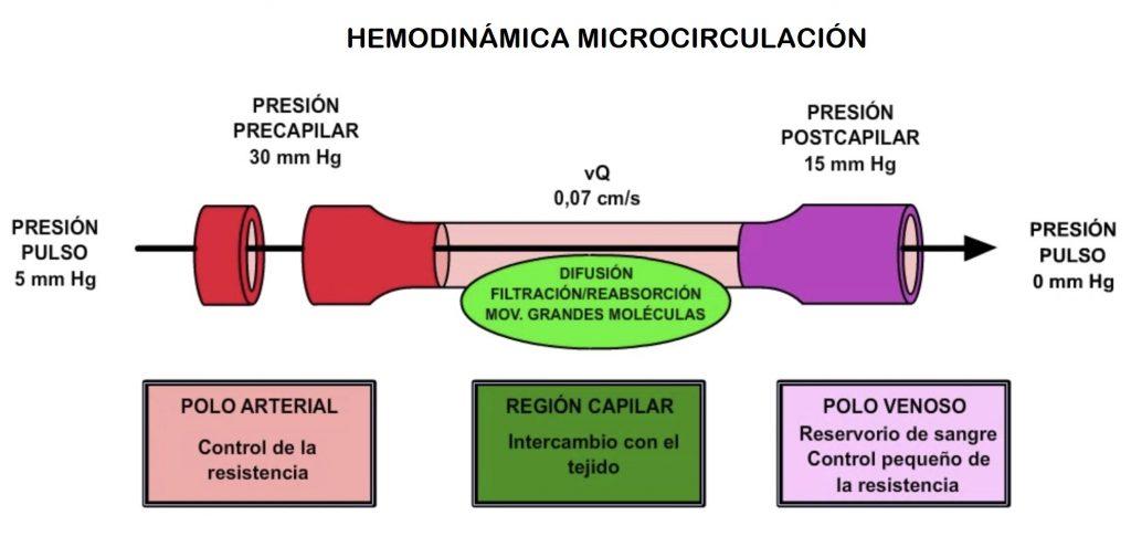 hemodinámica de la microcirculación