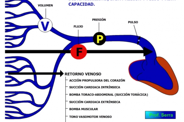 Características sistema venoso