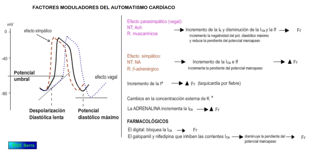 moduladores del automatismo cardíaco