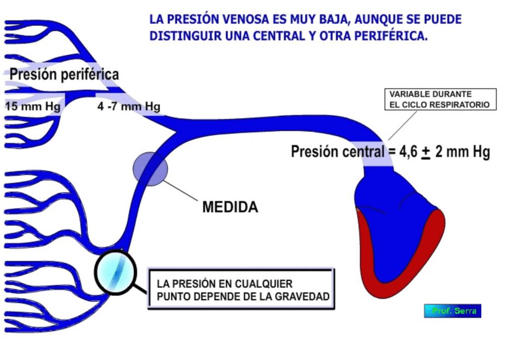 presión venosa