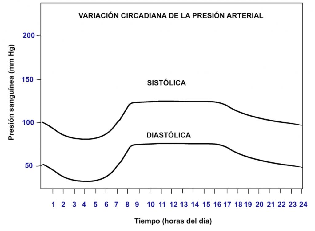 Ritmo circadiano en la presión arterial
