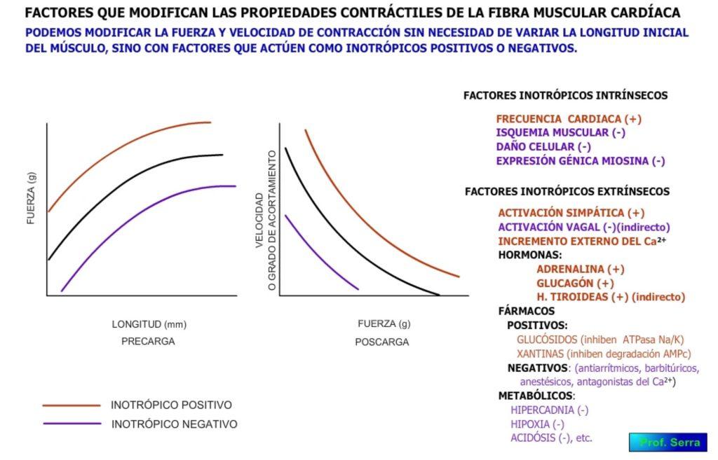 factores inotrópicos