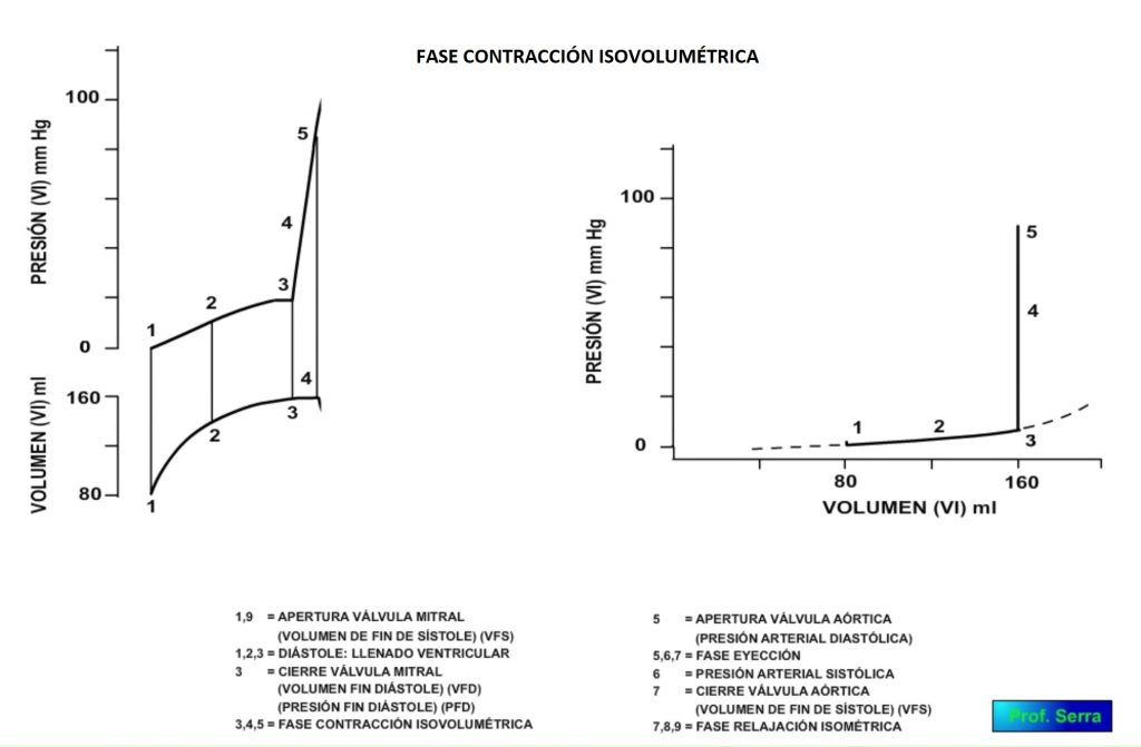 fase contracción isovolumétrica