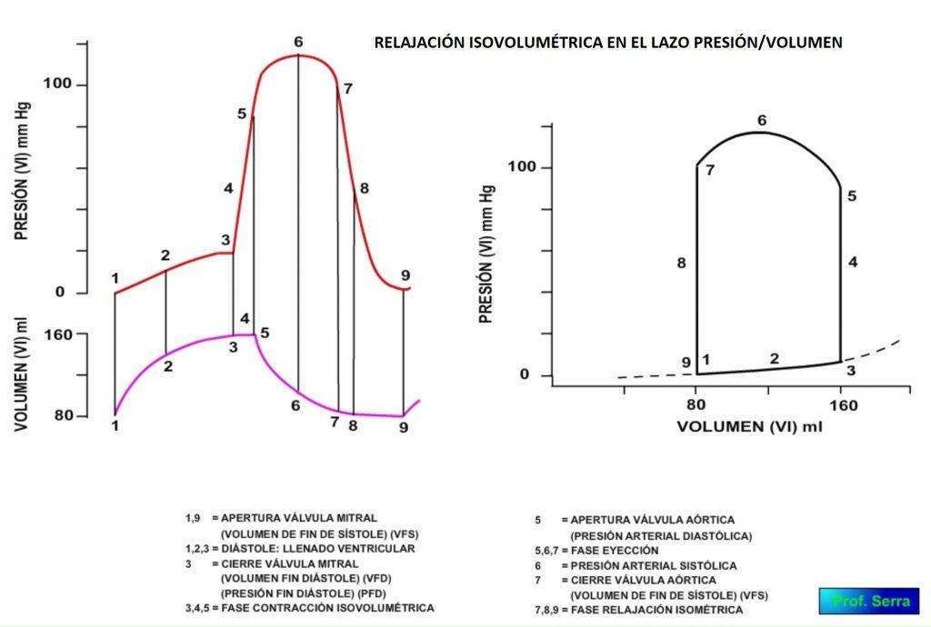 fase relajación isovolumétrica en lazo presión/volumen