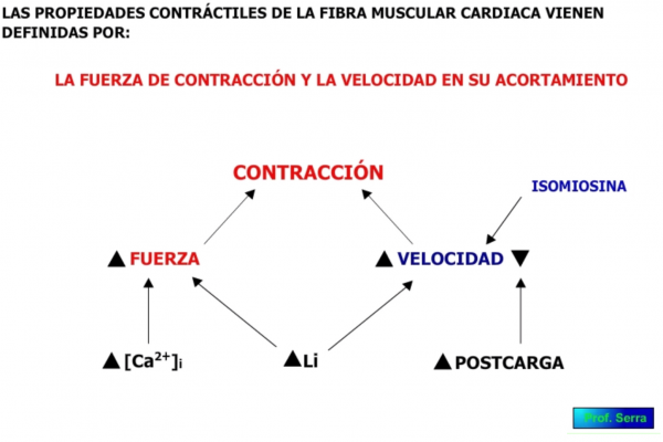 propiedades contráctiles de las fibras musculares cardíacas