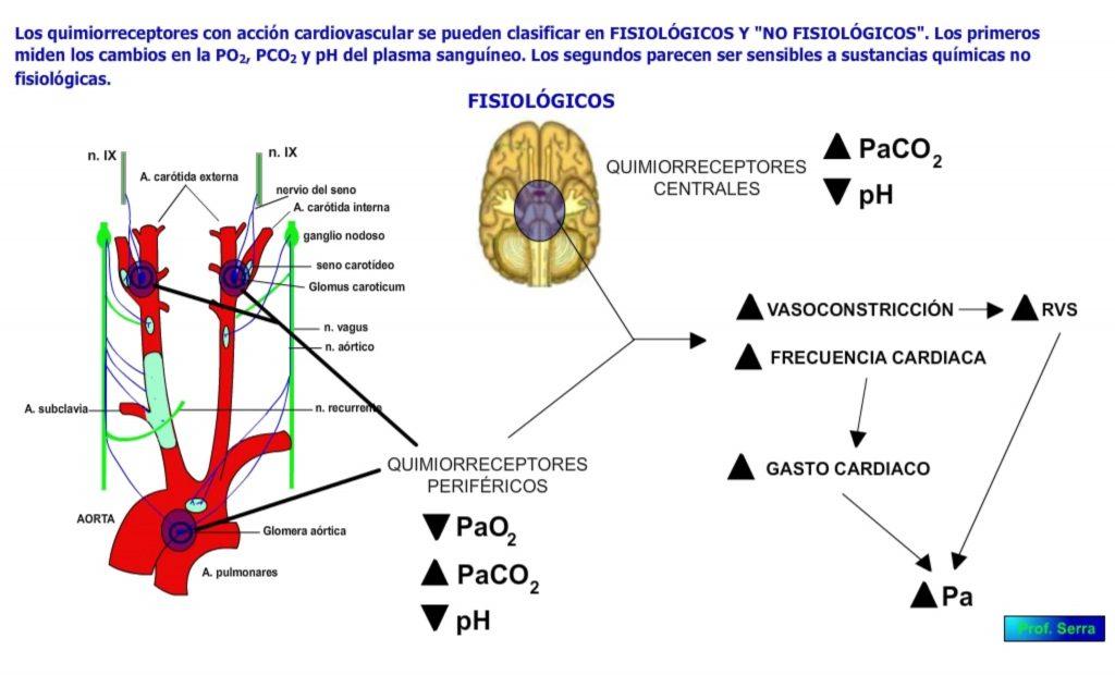Quimiorrecptores fisiológicos