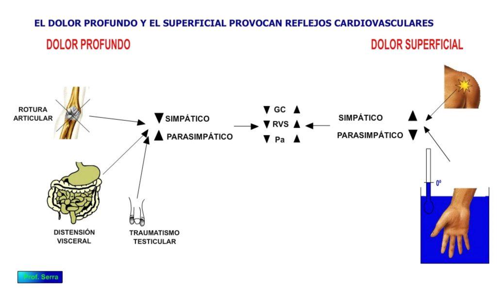 reflejo cardiovascular al dolor