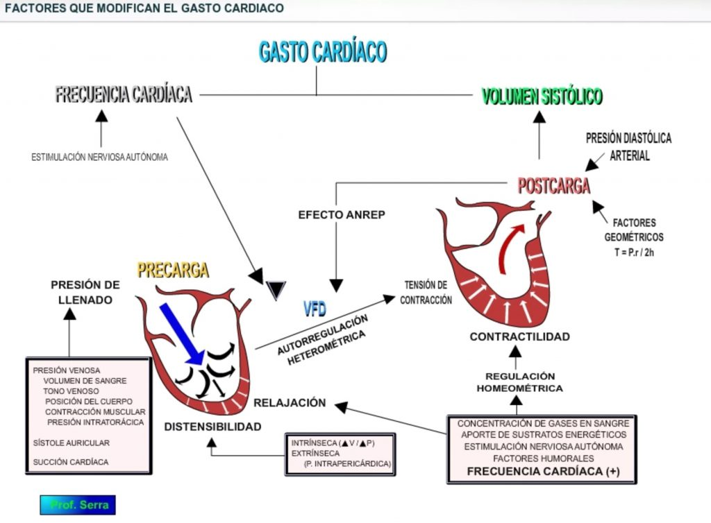 regulación gasto cardíaco