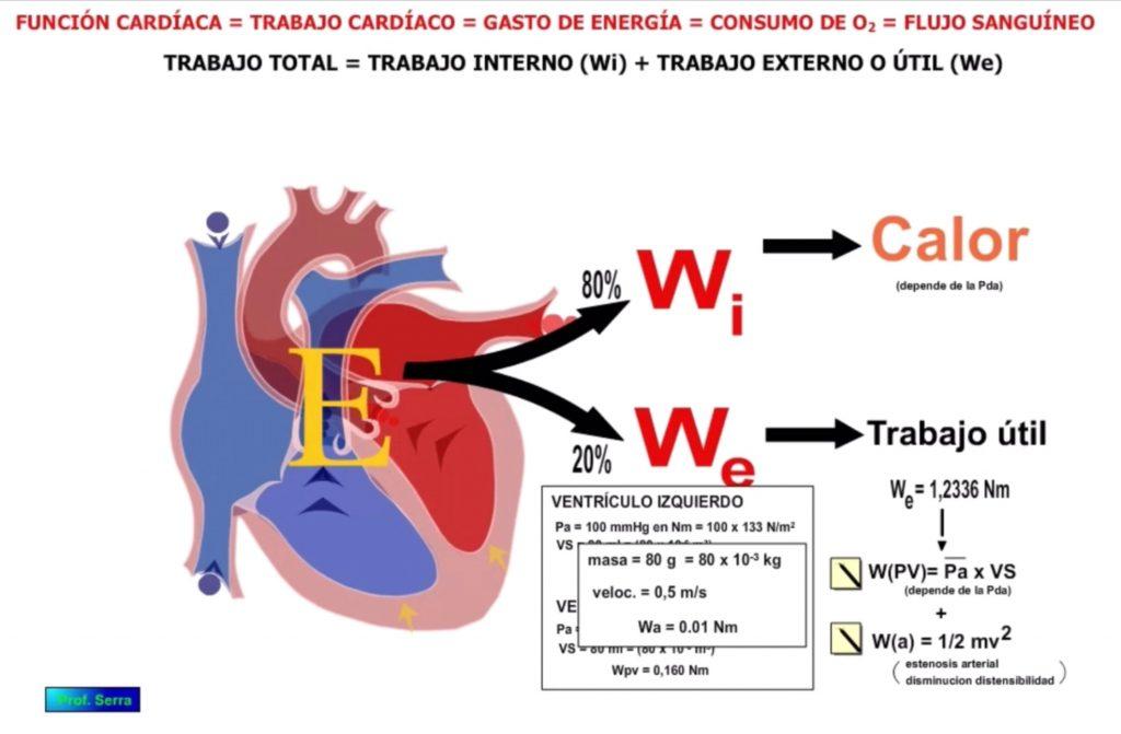 trabajo cinético cardíaco