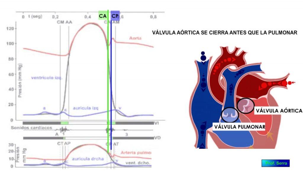 cierre válvulas aórtica y pulmonar