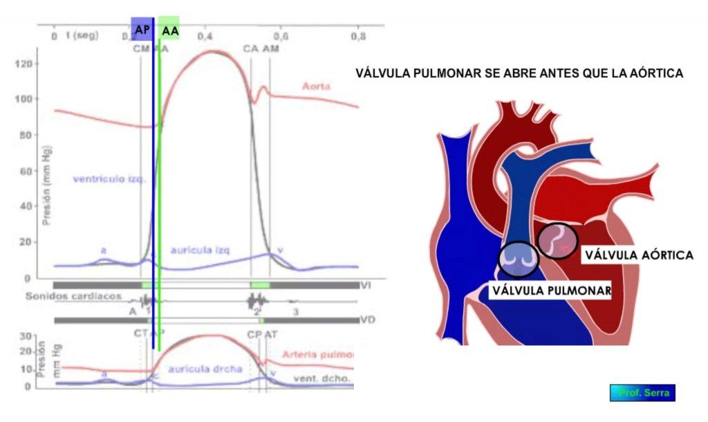 apertura válvulas pulmonar y aórtica