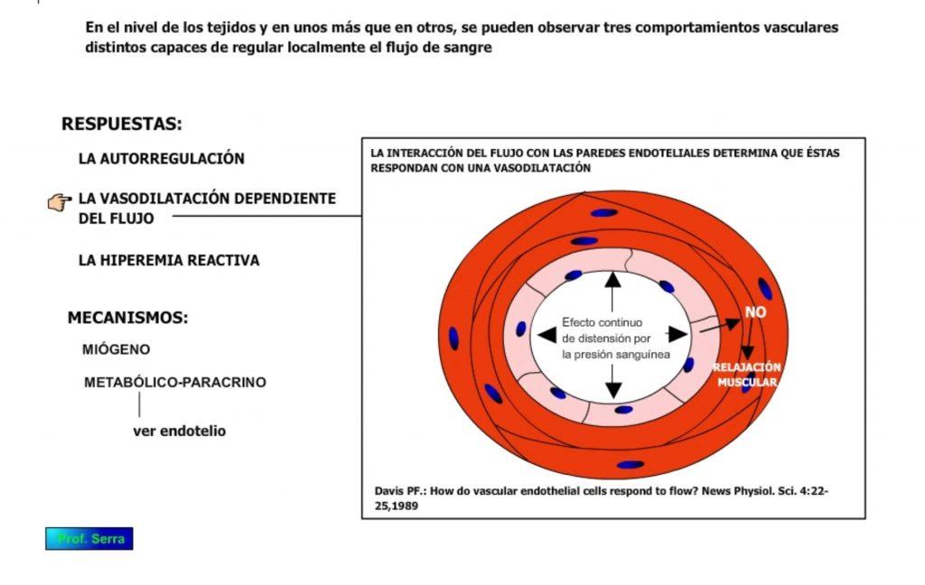 vasodilatación dependiente del flujo