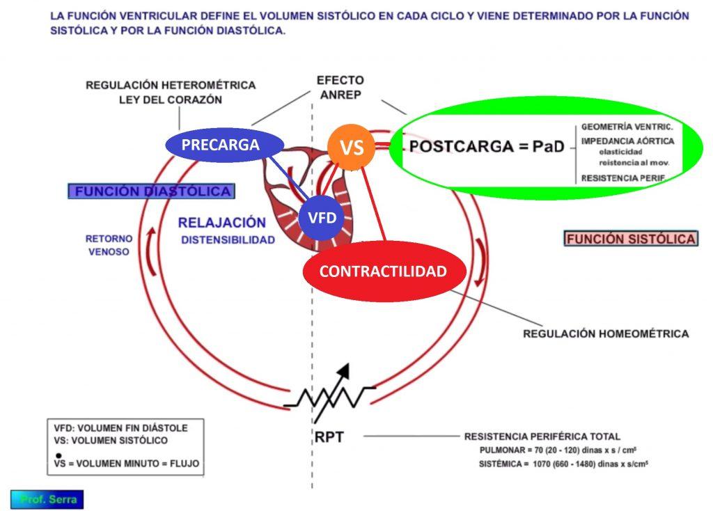 factores volumen sistólico