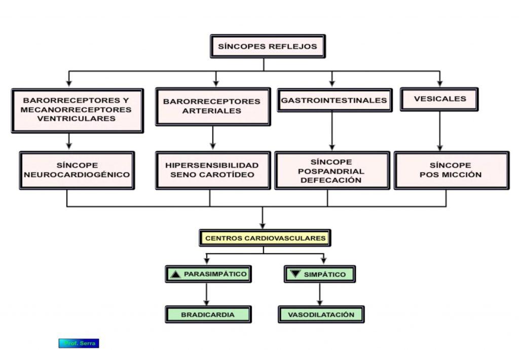 Cambios cardiovasculares a la hipotensión