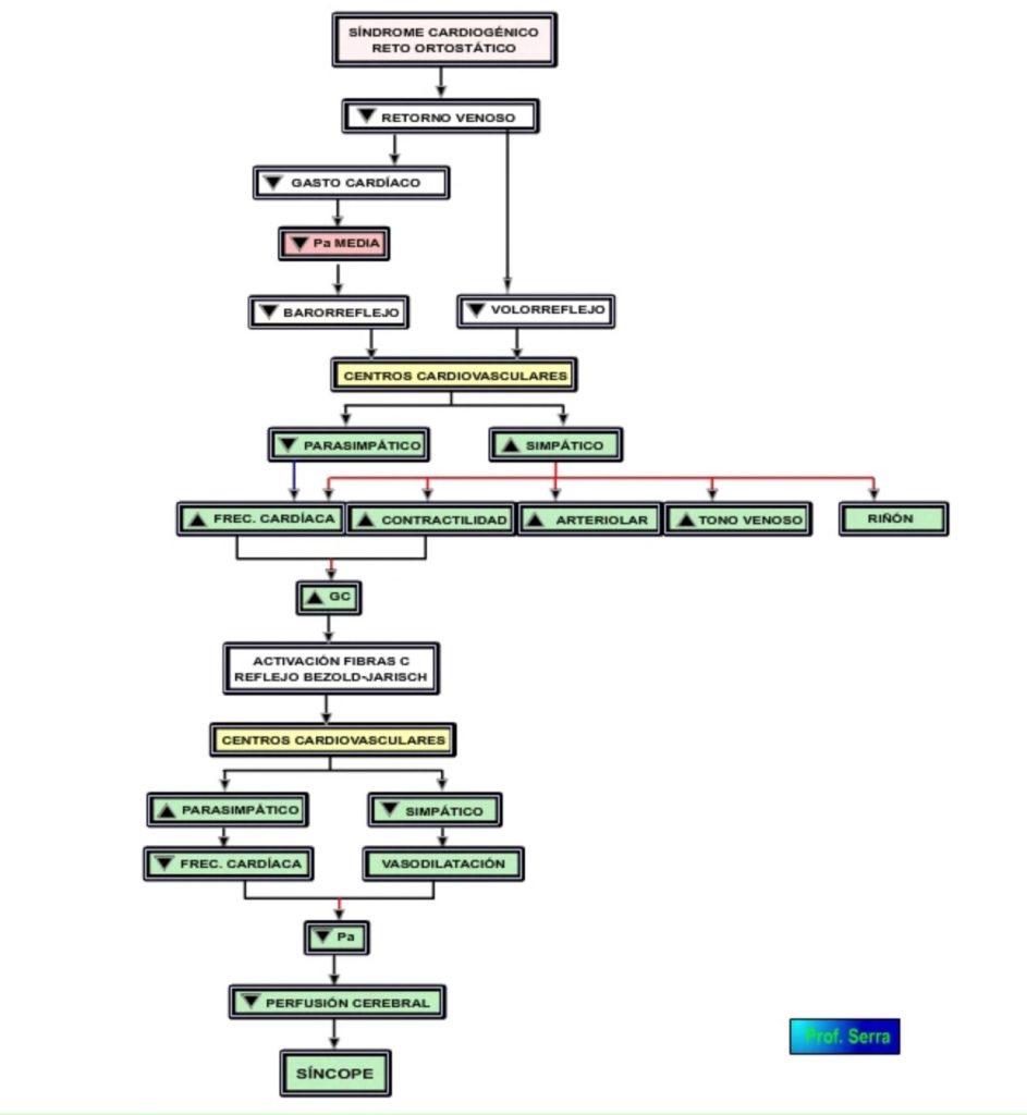 cv síndrome vasovagal