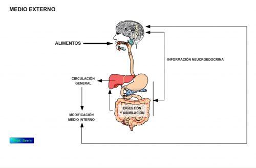alostasia 2