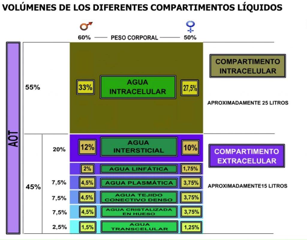 Volúmenes en los diferentes compartimentos líquidos