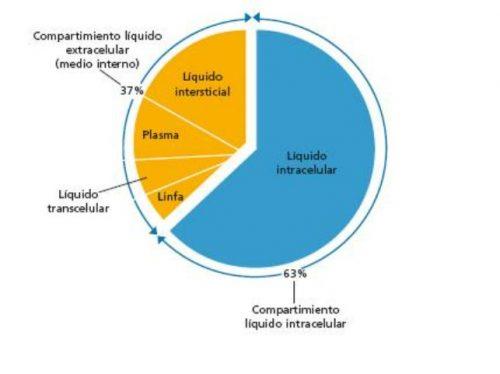 Distribución de los líquidos corporales