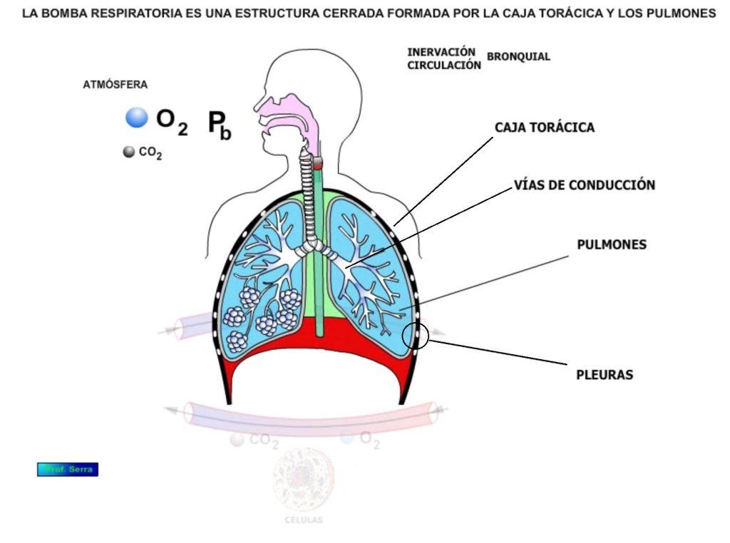 bomba respiratoria