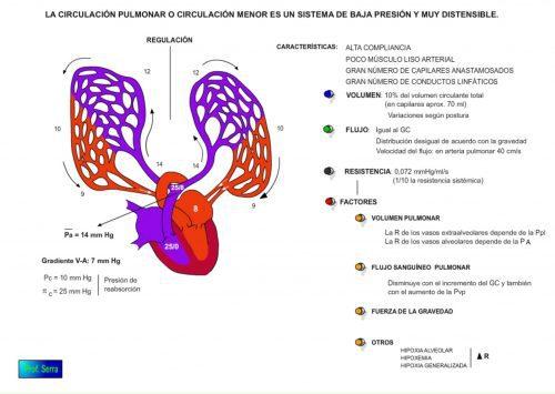 Hemodinámica de la circulación pulmonar