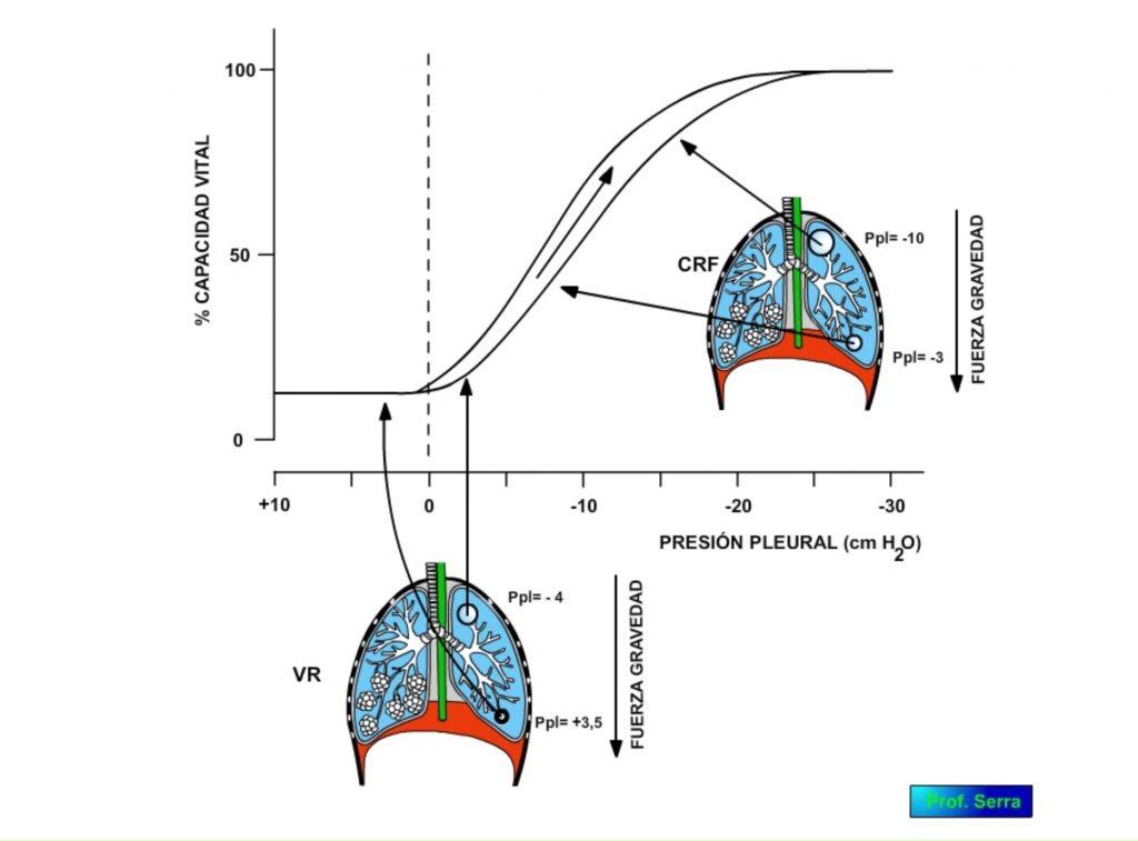 tensión superficial pulmonar y fuerza de la gravedad
