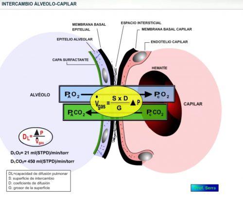 intercambio alveolo capilar