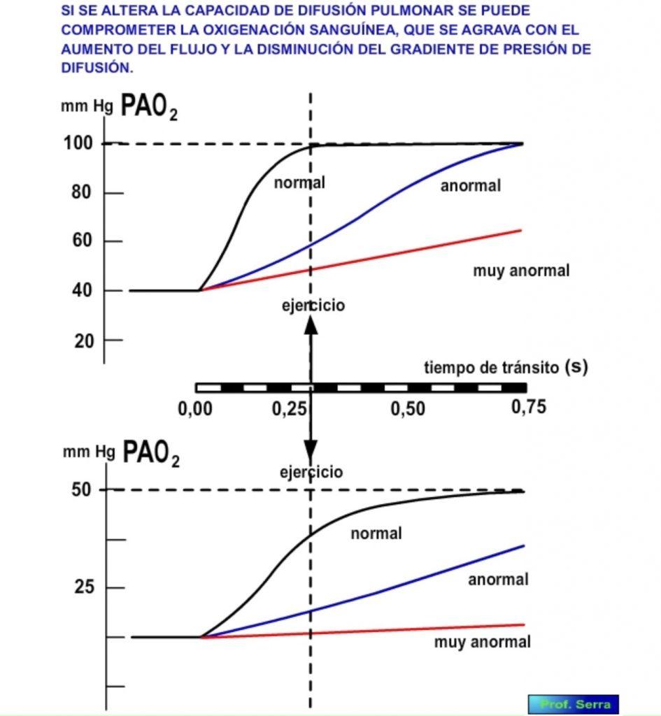 Modificaciones en el intercambio alvéolo capilar