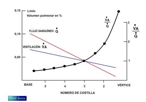 relación ventilación perfusión