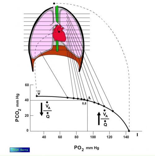 curva ventilación perfusión