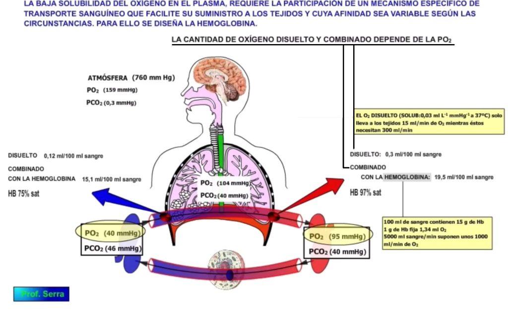 transporte de los gases respiratorios