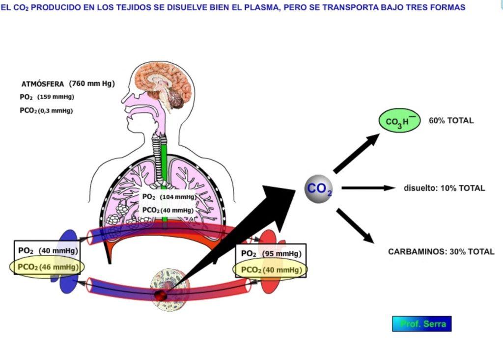 Transporte sanguíneo del CO2