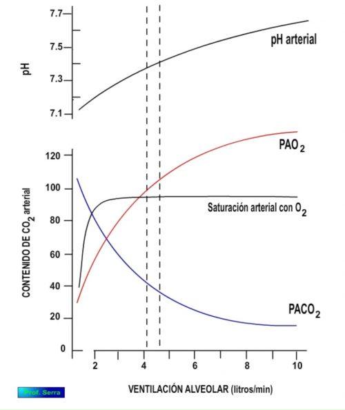 Efectos de la ventilación en el CO2 y el pH sanguíneo.