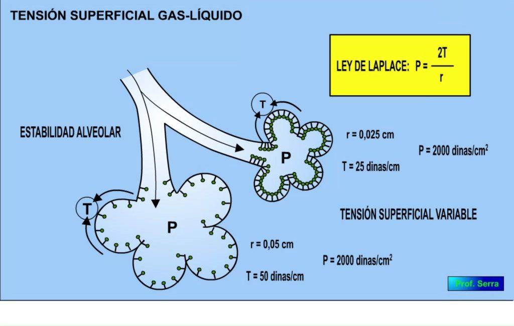 Agente tensioactivo y ley de Laplace