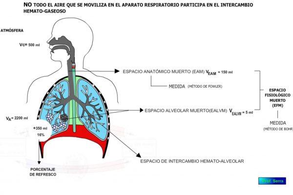ventilación alveolar