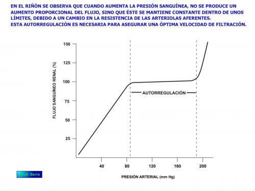 Autorregulación renal