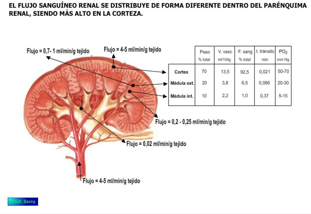 Flujo renal