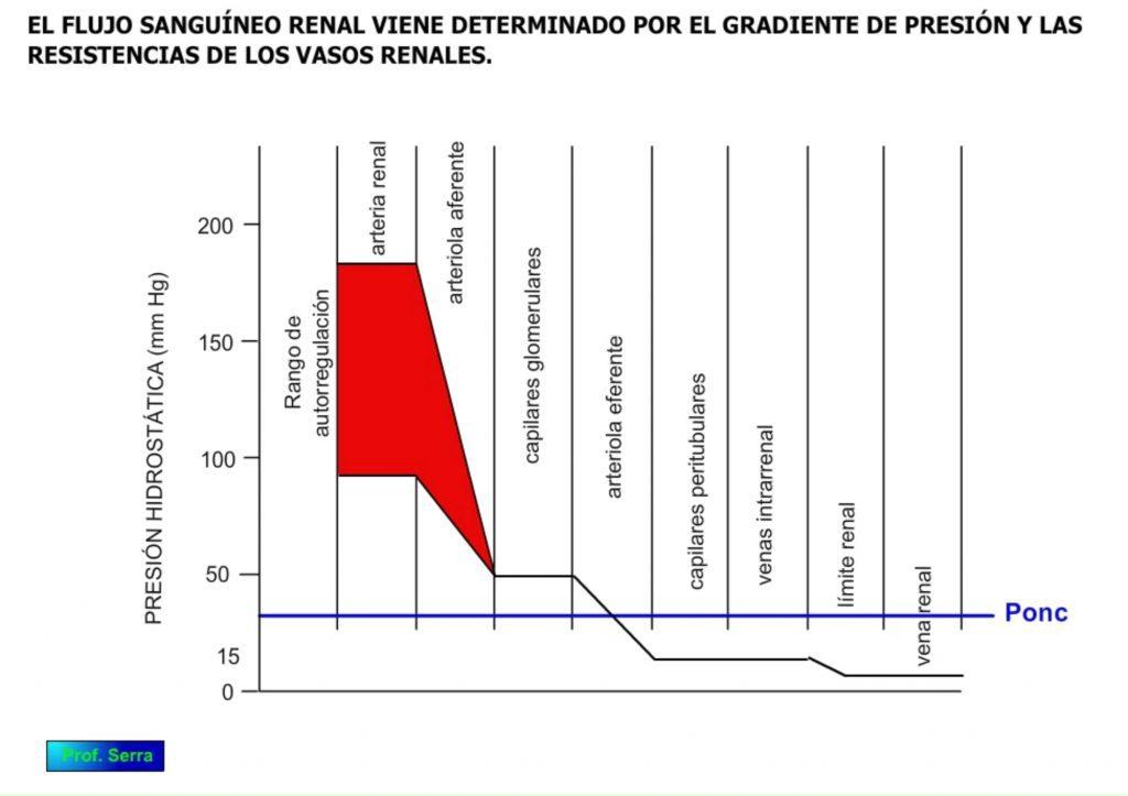 Presión circulatoria renal