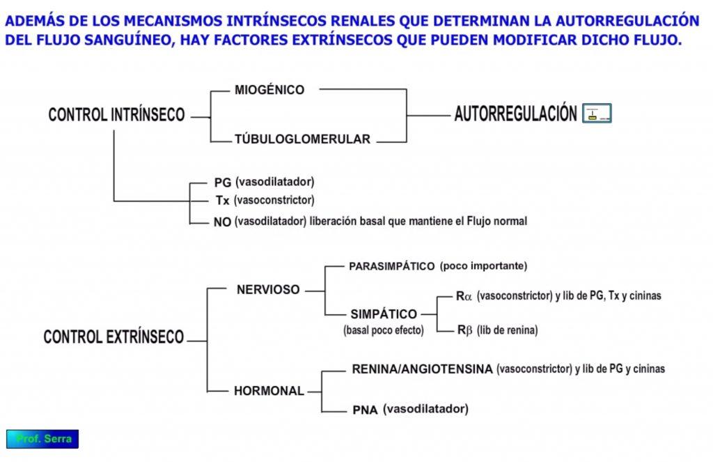 Regulación renal