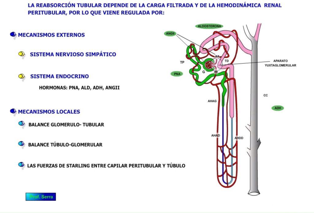 Regulación tubular